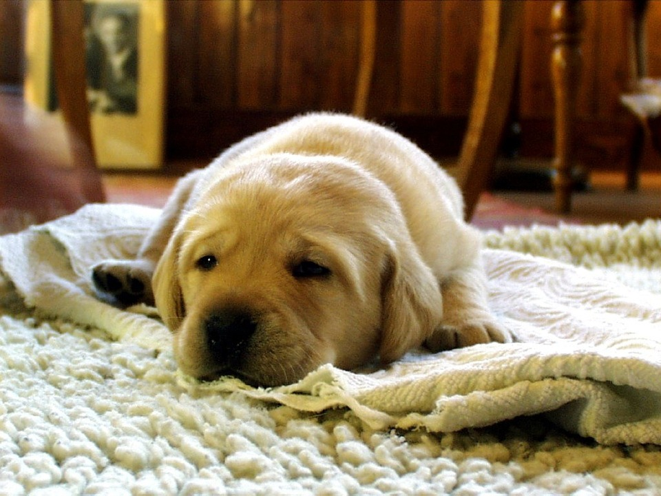 Let us at Mountaineer Cleaners keep your rugs and other household items clean and fresh this winter!